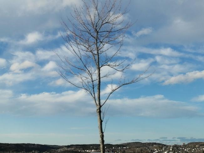 True Blue Saint John, NB