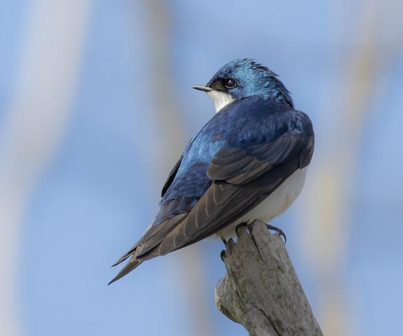 swallow Dundas, Millgrove, Hamilton, ON
