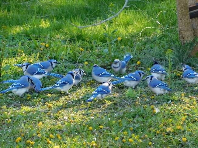 Blue Jay Family Innisfil, ON
