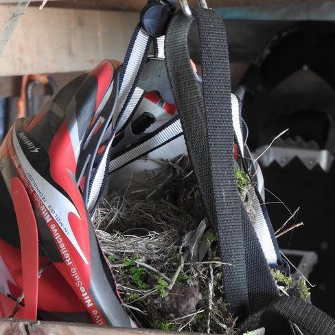 Birds nest takeover Gabriola Island, Gabriola, BC