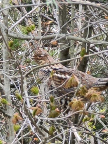 birds Wasaga Beach, ON