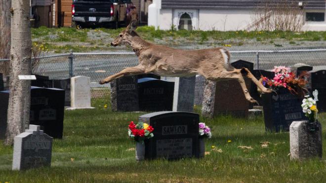 Flying Deer Eastern Passage, Nova Scotia