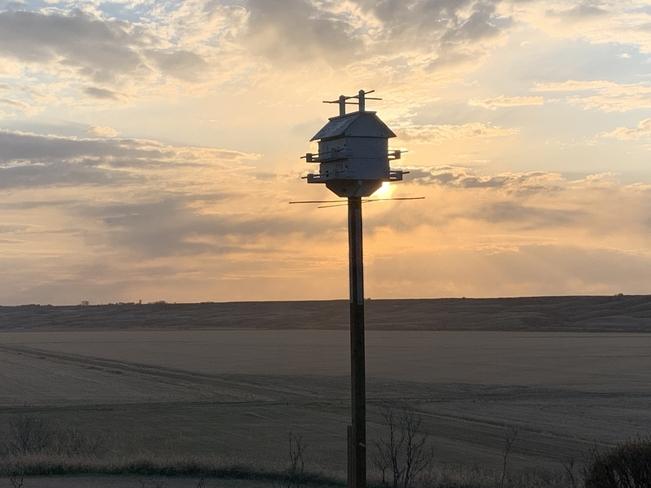 Pure Martin sunset Lumsden, Saskatchewan, CA