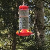 First hummingbird of the season 🥰