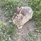 Bunny Pause