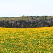 la beauté du jaune