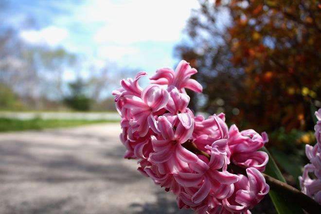 Beautiful Blossoms Halifax, Nova Scotia