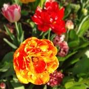 Fireball or Flower