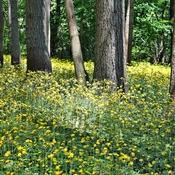 Mother Nature's Golden Carpet