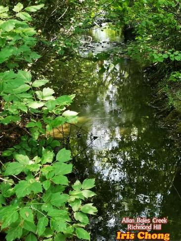 June 10 2021 24C Nice Weather at Allan Bales Creek, Richmond Hill Richmond Hill, ON