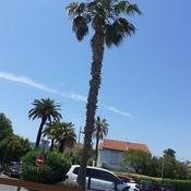 palm of Méditerranée