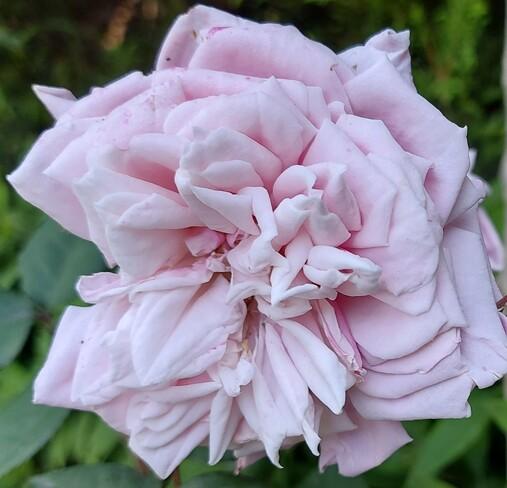 Rose Beauty Etobicoke, ON