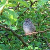 Baby sparrow really needs a nap