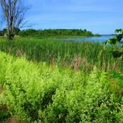 Kilmarnock Island and Locks Near Smiths Falls