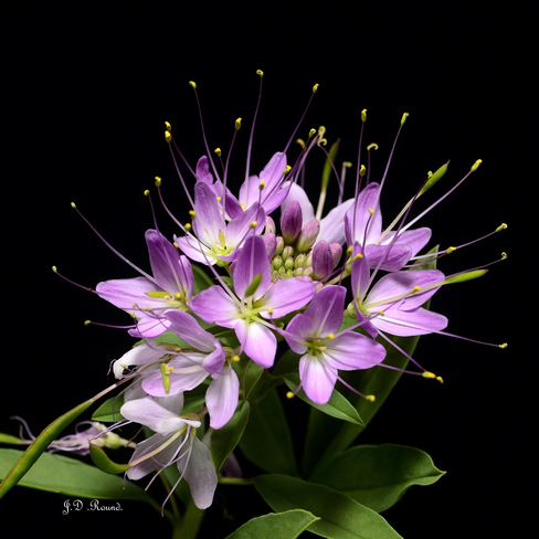 Tropical Flower? brooks, ab.