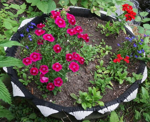 various flowers orono