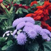 Some nice flowers