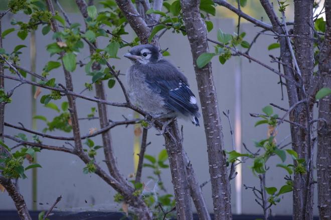 In our garden Edmonton, AB
