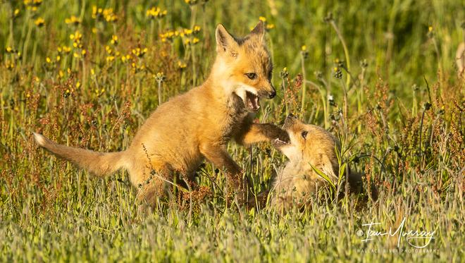 The Fox Family Wallace, Nova Scotia
