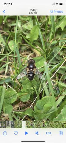 Wasp Strathcona County, AB