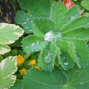 crystal after rain