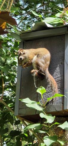 Squirrel Baynes Lake, BC
