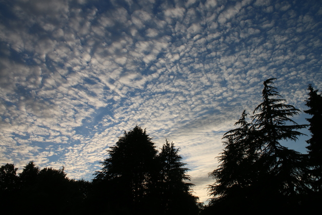 Alto Cumulus Cloud Minoru Park, Granville Avenue, Richmond, BC