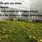 Flowers and beauty around every corner