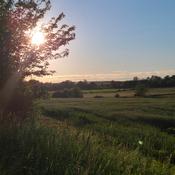 Farm Feild