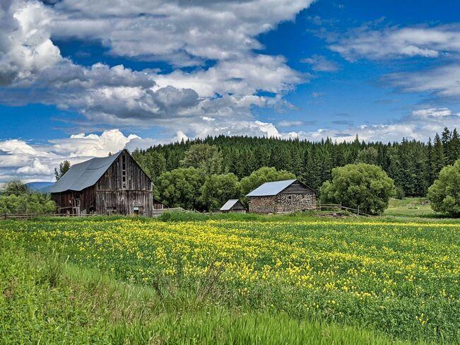 Old Barns Enderby, B.C.