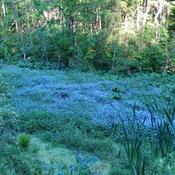 The Flora along the trail from Glenn Morris.