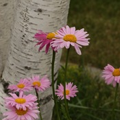 Flowers of Summer Saskatchewan
