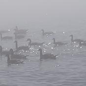 A Foggy Lake Ontario