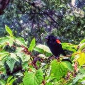 Bird in Pause