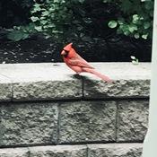 Mr. Cardinal has arrived