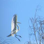 landing on a tree!