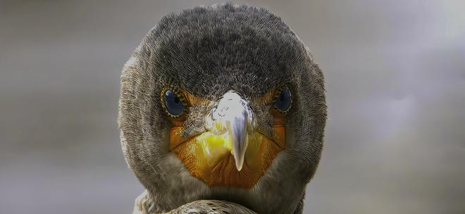 Grumpy Bird For Sure. Waterford Bridge Rd - Bowering Park, St. John's, NL A1E 1E8, Canada
