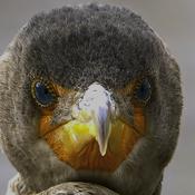 Grumpy Bird For Sure.