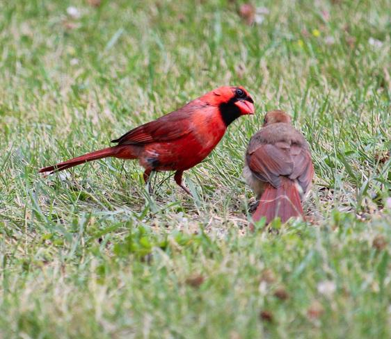 Birds Lambton County, ON
