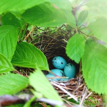 Baby sparrow eggs