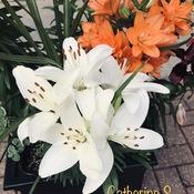 Liliams aka True Lilies