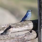 Mountain Bluebird Partners