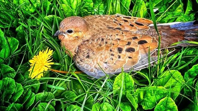 Bird in the grass Peterborough, ON