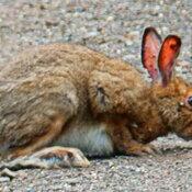 Wildlife near Thunder Bay