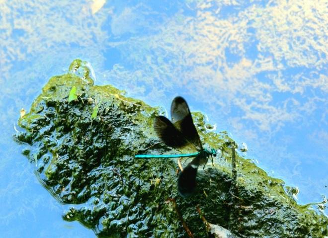 dragon fly planet Brampton, ON