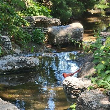 A cardinal just resting at Rockway Gardens.