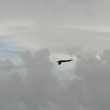 Blue Angels of Pensacola