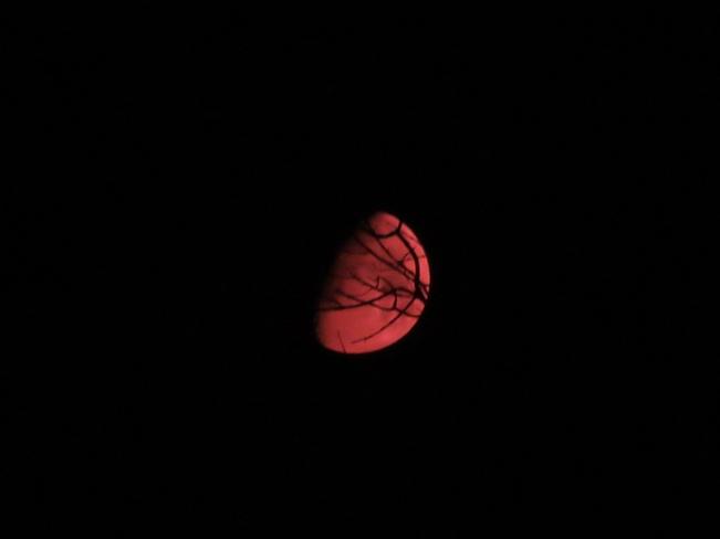 Moon in Red Willow Beach, Georgina, ON