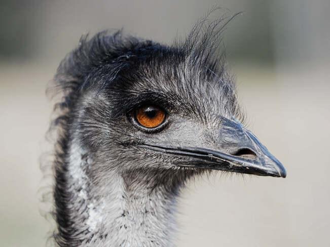 The Heron Stalker Gelert, ON