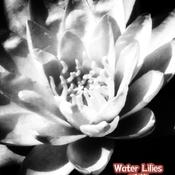 July 22 2021 24C Water Lily- Humber Arboretum Etobicoke Toronto